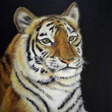 Tiger(アムールトラのココア)