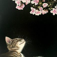 春・桜・猫